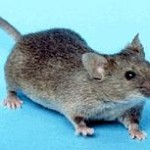 commercial mouse extermination georgia